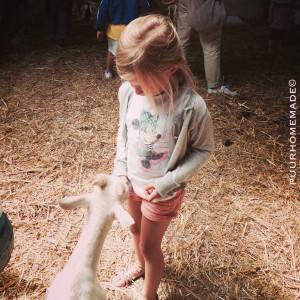 op de geitenboerderij