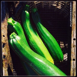 courgetteoogst