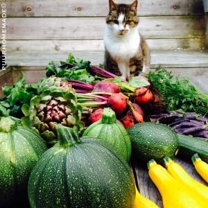 MOESTUIN_oogst met Siep_Puur Homemade